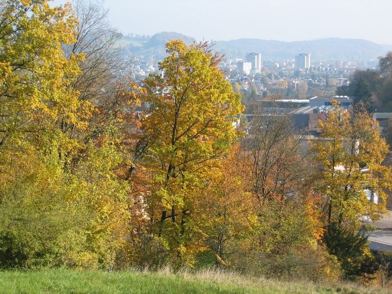 Waldrand Sonderwaldreservat Sonnenberg