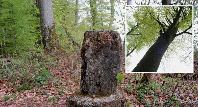 Naturwaldgarten Baden, Zeit, Naturort 14