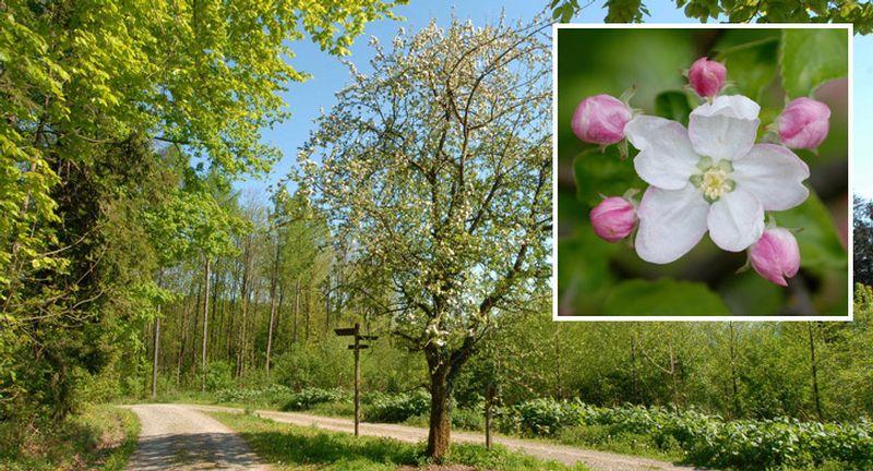 Naturwaldgarten Baden, Wander der Zeiten, Naturort 15