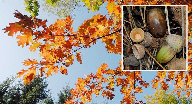 Naturwaldgarten Baden, unter Eichen, Naturort 28