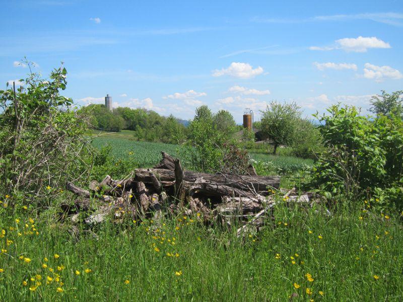 Richtplanung Natur und Landschaft Badener Wald - Wald bei der Baldegg